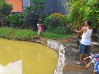 Piara Ikan Konsumsi Sendiri