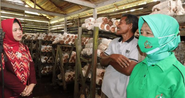 Ketua Persit Kartika Candra Kirana Cabang XLV Sambangi Lokasi Budidaya Jamur Tiram