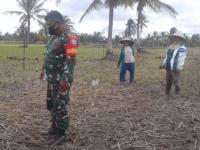 Dampingi Petani, Upaya Khusus Babinsa Matang Danau Tingkatkan Swasembada Pangan