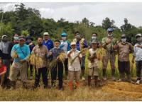Produksi Gabah Diprediksi Meningkat, Perkuat Ketahanan Pangan Melawi