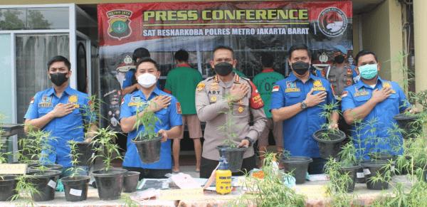 Satuan Narkoba Polres Metro Jakarta Barat Beberkan Pengungkapan Kasus Kebon Ganja Rumahan Hidroponik di Brebes, Jawa Tengah