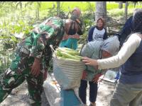 Dukung Potensi Wilayah Babinsa Serindang Motivasi Petani