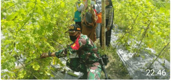 Sertu Agus Subroto Dampingi Ibu PKK Budidaya tanaman Sayuran